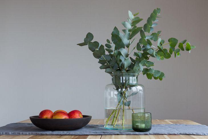 clip a sprig of eucalyptus and replant