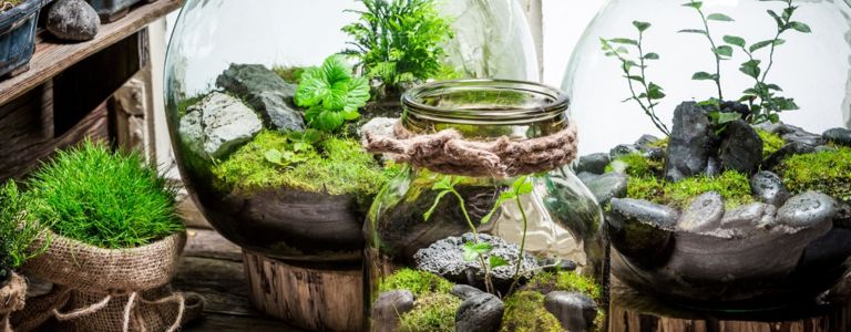 Picking the Perfect Plants For Your DIY Terrarium