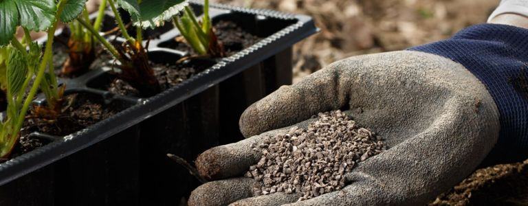 Bone Meal Benefits: Why Your Garden Needs It