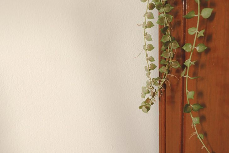 String of hearts vine trailing off furniture