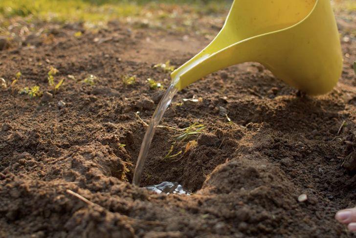 Gardner planting seeds