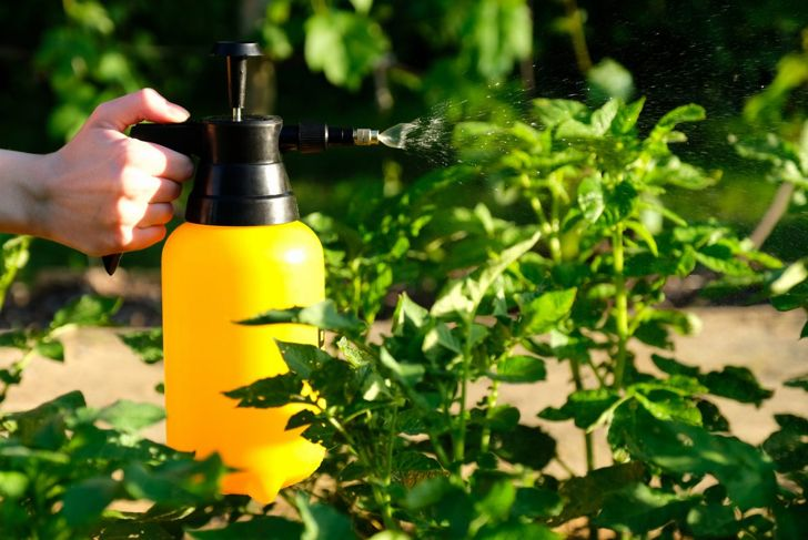 Spray bottle spraying plants