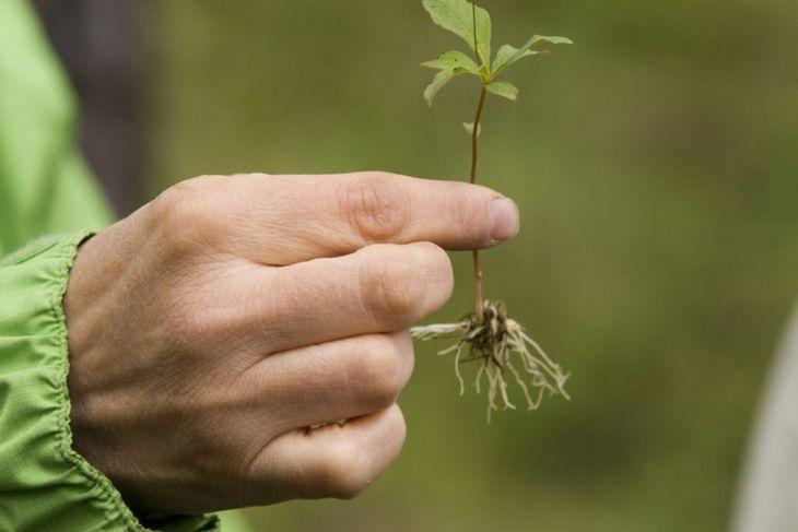 weed seedlings seeds propogate stems