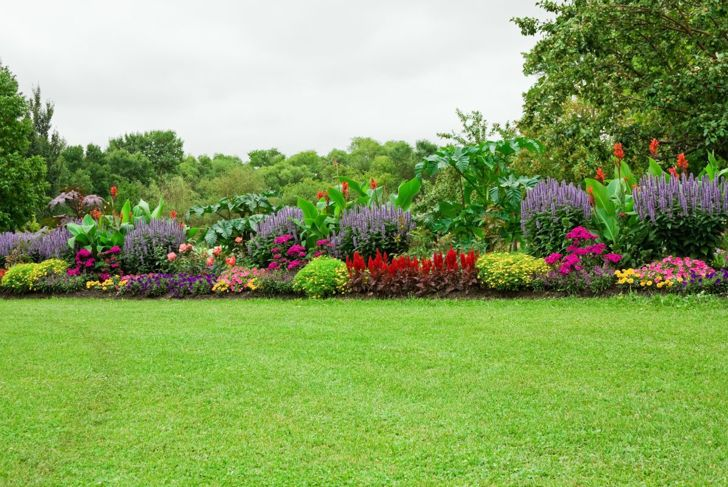 Garden of multiple colored plants