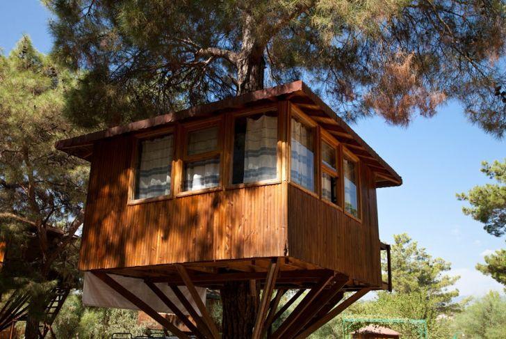 Cabin tree house