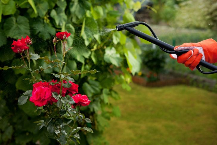Spraying plants to protect from pests