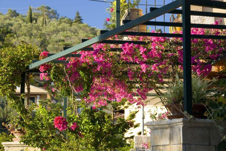 Flowers on pergola