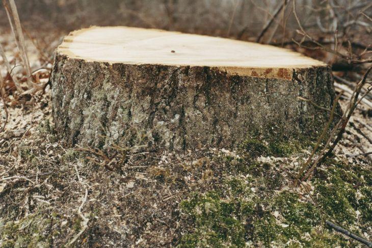 A single tree stump