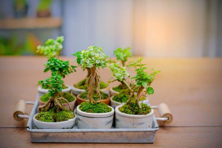 tiny forest bonsai