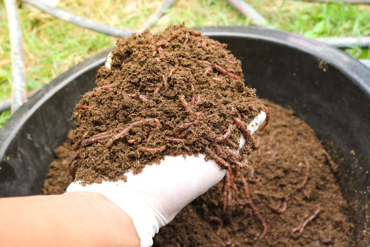 mix worm castings into compost