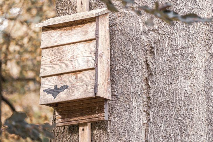 assemble your bat house