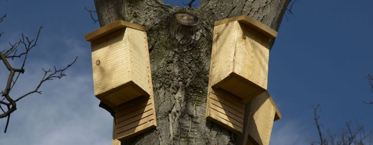 How to Become a DIY Bat House Landlord