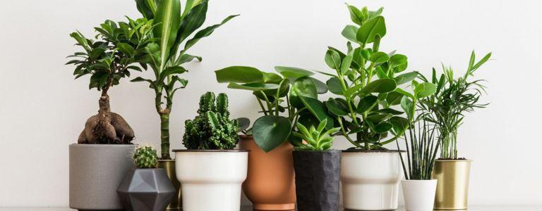 DIY Self-Watering Planters for Forgetful Gardeners