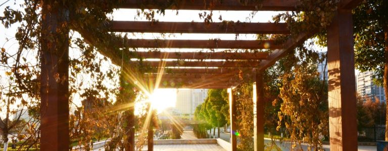 Perk Up Your Party Game With a Backyard Pergola