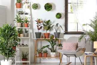 Indoor Plants Breathe Life Into Your Rooms