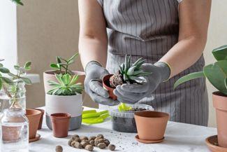 Choosing the Best Succulent Soil