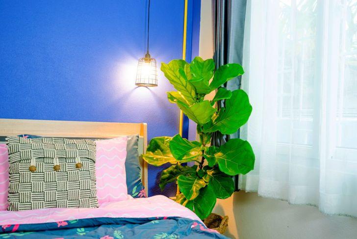 Fiddle leaf fig in bedroom