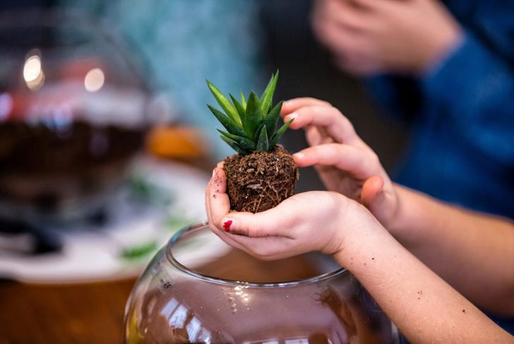 Girl holding succulent above terrarium.