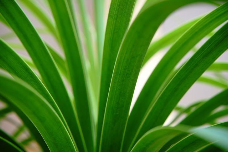 the plant absorbs toxic gas through its leaves