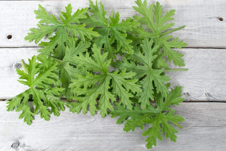 As long as it grows in properly aerated soil to prevent root rot, the citronella is safe from most diseases.