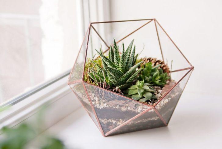 Mini succulent garden in glass terrarium.