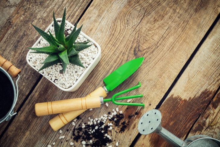 Succulent in pot with garden tools on table.