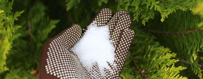 Using Epsom Salt in Your Garden