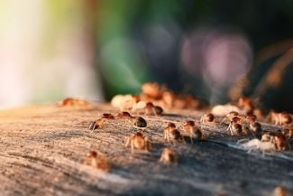 Rid Your Home of Termites For Good