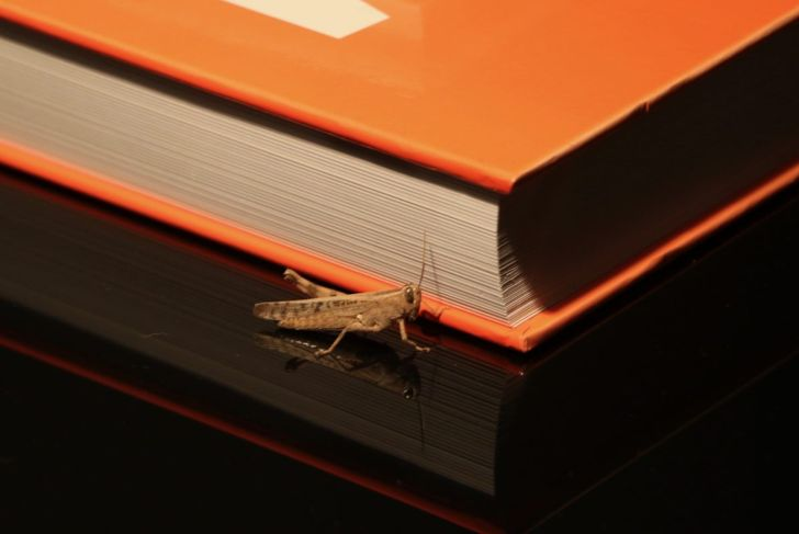 a cricket crawls by a book