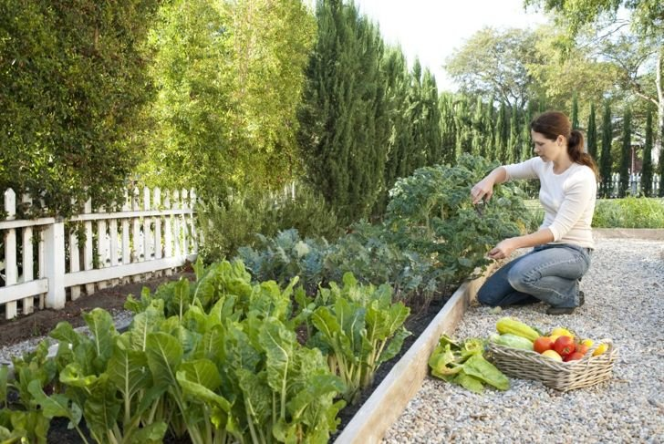 Your own garden can be a sustainable source of food.
