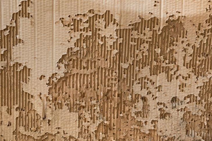 cardboard termite trap