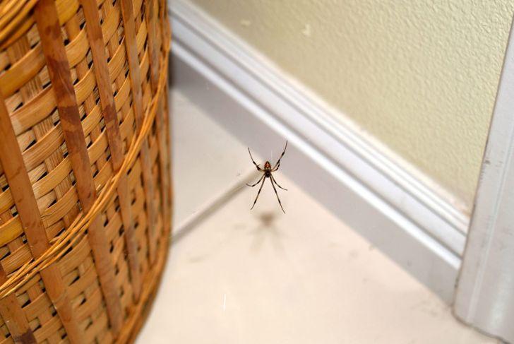 spider near a basket