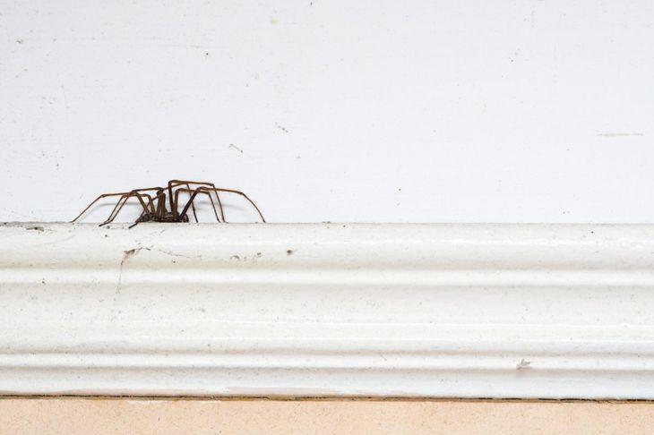 a spider walking