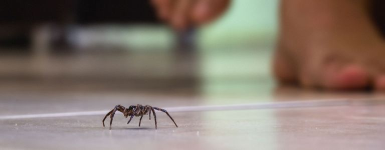 Effective Ways to Get Rid of Spiders For Good