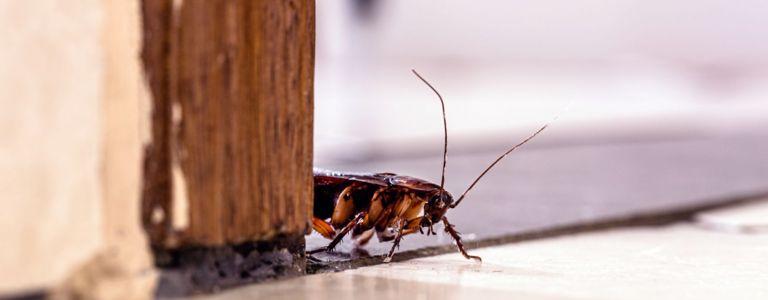 Effective Ways to Wave Carpet Beetles Goodbye