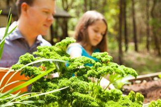 Every Gardener Should Grow Parsley