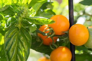Game-Changing Companion Planting Combos