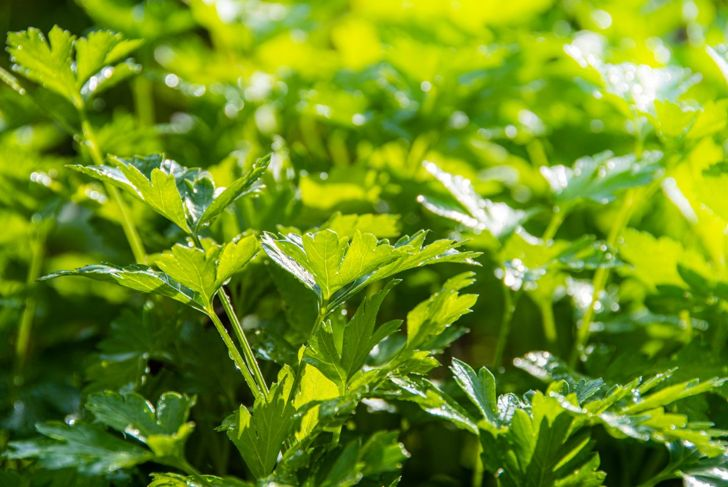 full sun partial shade planting