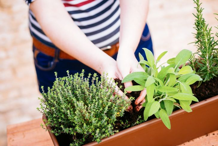 outdoors indoors planting soil sage