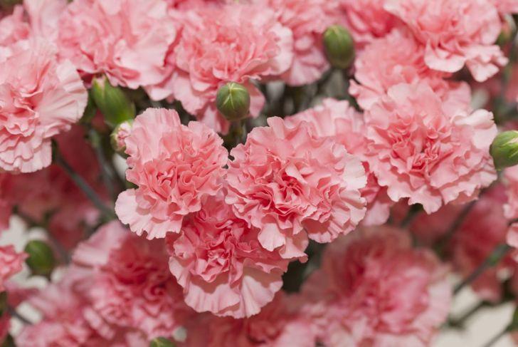 Carnations taste surprisingly sweet.