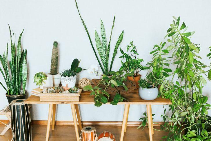 Indoor plants in pots.