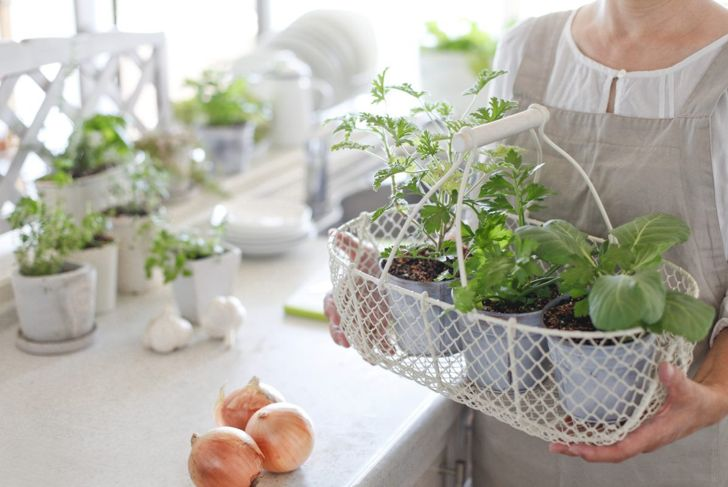 Metal hanging tray holding plants.