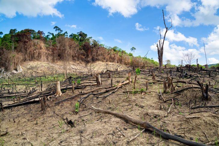 Clear-cutting deforestation Asia