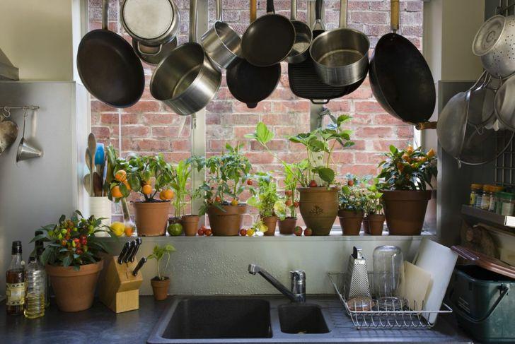 Indoor garden growing in kitchen window.