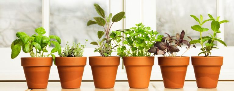 Here are 10 Tips for Planning Your Indoor Garden