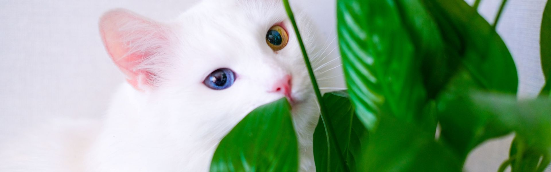 Toss These Toxic Plants If You Have Pets