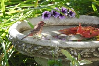 Tips To Draw Birds and Butterflies To Your Garden
