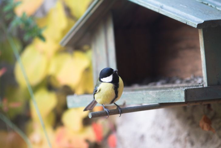 yellow and black bird perched in front of birdhouse