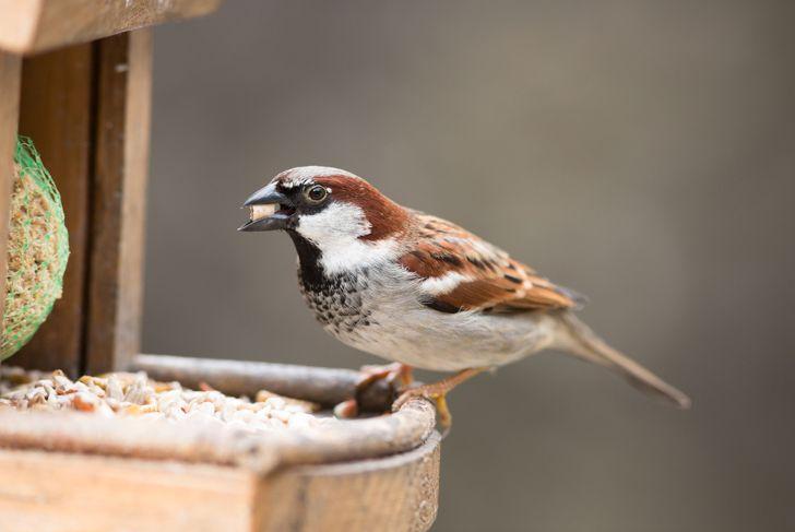 small bird eating seed from bird feeder