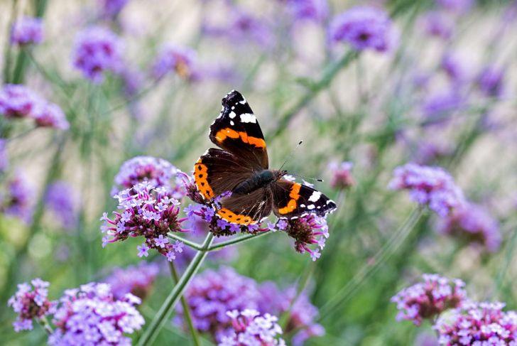 closeup of beautiful butterfly on purple flowers